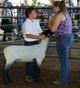 Cody and a Lamb