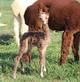 New born Belviso