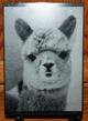Photo of Custom Marble Alpaca Etchings!