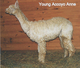 Photo of Young Accoyo Anne