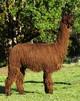 Photo of ELDORA's Kaiya