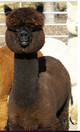 Photo of Snowmass Highland Amber