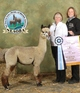 Photo of Sonic Boom of Salmon River Alpacas*