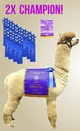 Photo of Estrada's Lucca of Island Alpaca