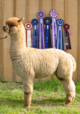 Photo of Alpaca Adventures Milano