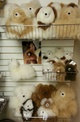 Large Selection of Alpaca Teddy Bears!