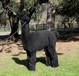 Photo of Hobby Horse Black Epic's Signature