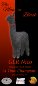 Photo of GLR Nico