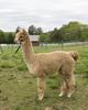 Photo of BB Farm's Angelina