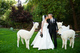 Alpaca Wedding/Event Rentals.