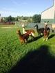 Photo of Huacaya Herd Downsizing Sale