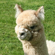 Photo of Skyline's Dahlia + 2019 Female cria