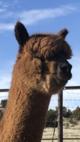 Photo of Akasha's Jasper