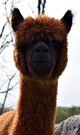 Photo of Magic's Sienna