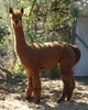 Photo of Delphi's Kaeya