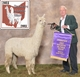 Photo of HERDSIRES-BIOPSIED - CLASSIFIED - EPD'S