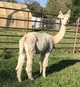 Photo of NGG Sophia