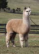 Photo of A Paca Fun's Jester