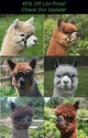 Photo of 7 or 6 ALPACAS! - An Amazing Package with 2 females pregnant & one new cria