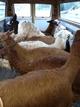 Van for smaller/short transports