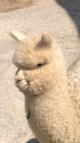 Photo of Fortunato's CASPER