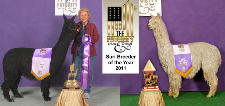Suri alpaca breeding & genetics