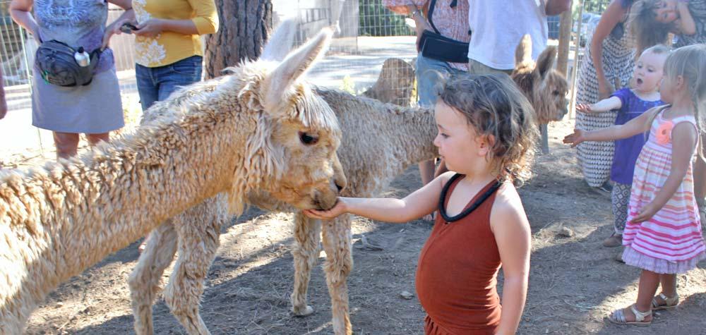 Sacramento, CA area alpaca farm