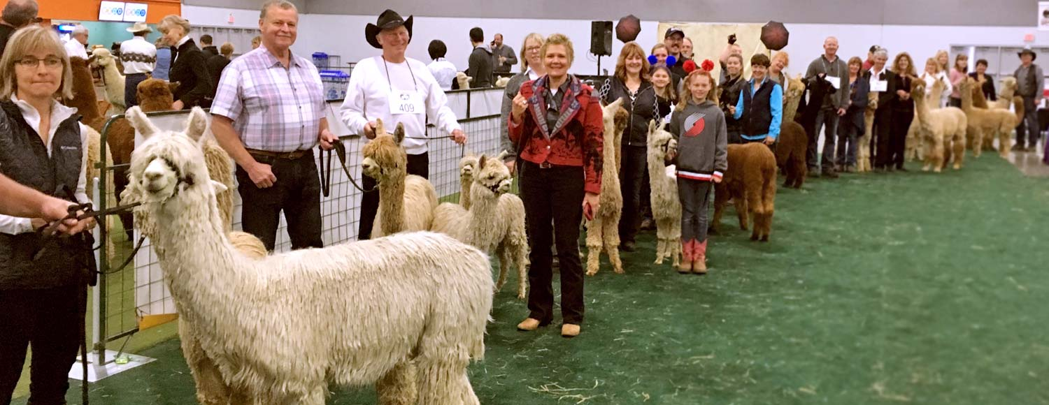 Getting started with alpacas in Oregon, Washington